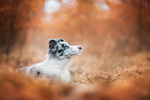 Обои Пес в осенней траве, фотограф Iza Lyson