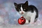 Обои Черно-белый котенок с новогодней игрушкой