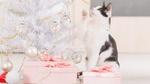 Обои Черно-белый котик смотрит на белую новогоднюю елку с шариками