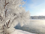 Обои Дерево в инее на берегу реки, по которой стелется туман