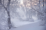 Обои Зимний пейзаж, Санкт-Петербург, фотограф Ed Gordeev
