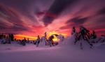 Обои Деревья в снегу на рассвете, фотограф Jоrn Allan Pedersen