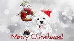 Обои Щенок в новогодней шапке рядом со снеговиком, (Merry christmas / счастливого Рождества), by Kajenna
