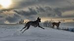 Обои Две собаки зимним днем играют на снегу, by mtajmr