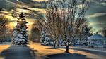 Обои Ели и их тени на снегу на закате солнца