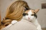 Обои Трехцветная кошка на плече у девушки с длинными волосами, размытый фон, by naDrapaku