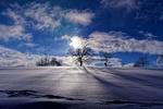 Обои Зимние деревья на горизонте под облачным небом
