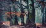 Обои Осенний лес в легком тумане, фотограф Otto Gal