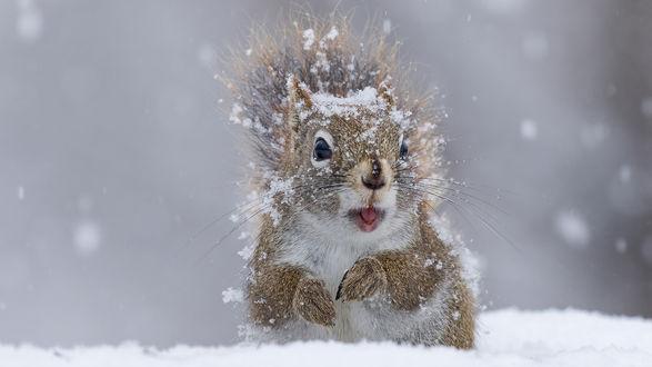 Белка под падающим снегом