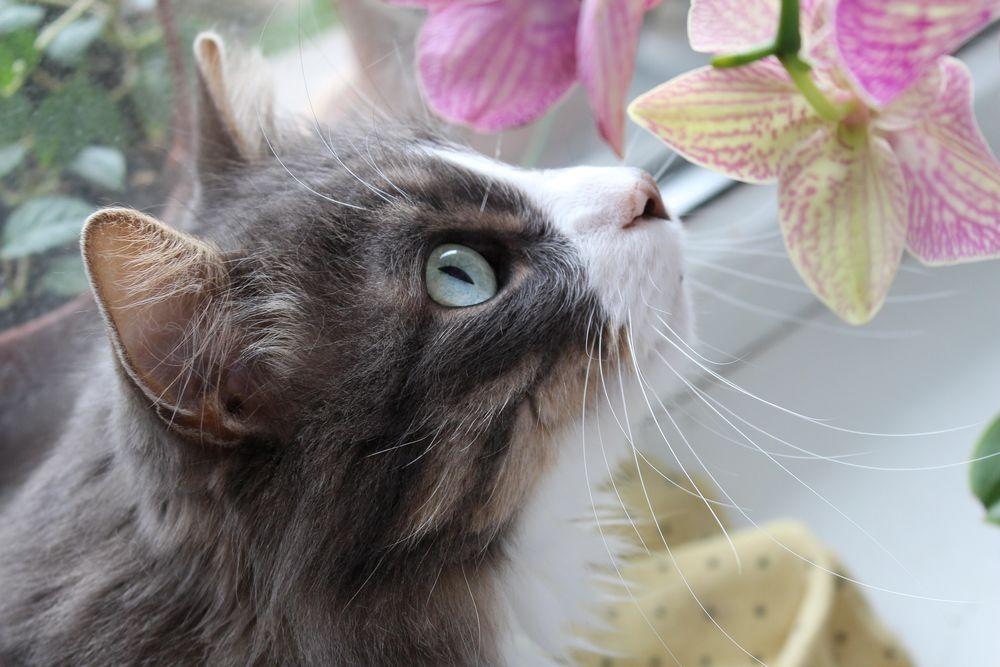 Картинки котов из наруто можете