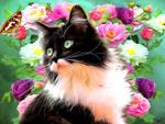 Обои Черно-белая кошка на фоне цветов с бабочкой, by makiskan