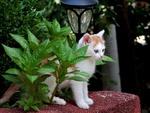Обои Кошка, сидящая у фонаря, среди растений, by explorerbob
