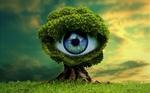 Обои Одинокое дерево с человеческим глазом в зеленой кроне, рассвет