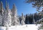 Обои Заснеженные деревья на фоне гор