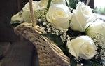 Обои Цветочная композиция из белых роз в корзинке