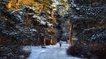 Обои Девушка прогуливается по зимнему парку, фотограф Roman Alyabev