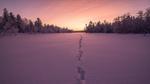 Обои Следы на заснеженной поляне у леса