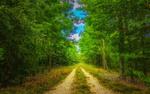 Обои Дорога в лесу на фоне идущего дождя
