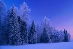 Обои Деревья в ажурной зимней измороси. Фотограф Владимир Рябков