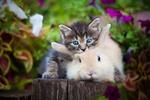 Обои Котенок с кроликом на досках среди цветов, фотограф Юрий Коротун