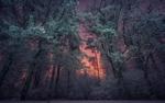 Обои Рассвет в заснеженном лесу