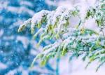 Обои Ветка дерева запорошена снегом