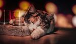 Обои Трехцветный котенок спит возле подставки для свечей