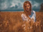 Обои Девушка стоит в колосистом поле, фотограф Saulius Ke