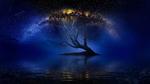 Обои Дерево под ночным звездным небом, фотограф Nasser Osman