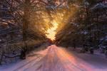Обои Дорога через зимний лес, фотограф Aleksei Malygin