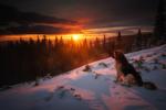 Обои Собака сидит на снегу на фоне заката. Фотограф Николай Алексиев