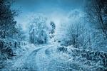 Обои Зимняя дорога с ограждением, между деревьев на фоне пасмурного неба