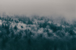 Обои Покрытый инеем еловый лес в густом тумане, by Te0SX