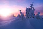 Обои Морозное зимнее утро, фотограф Jоrn Allan Pedersen