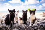 Обои Семейство кошачьих на камнях у моря