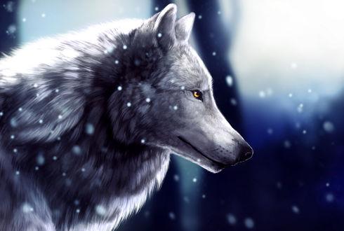Обои для рабочего стола Белый волк под падающим снегом, by UniQuest (© Мася-тян),Добавлено: 11.02.2018 00:32:39
