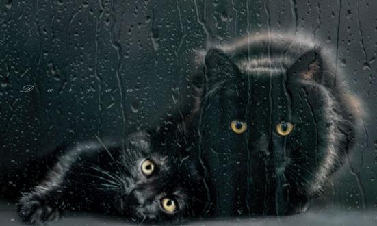 Обои для рабочего стола Черная кошка и котенок за окном с каплями дождя, фотограф Darian (© zmeiy),Добавлено: 18.02.2018 01:20:53