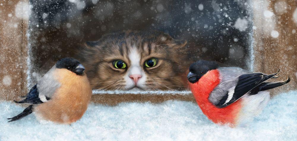 Обои для рабочего стола Кот за окном наблюдает за снегирями, by Alena Ekaterinburg