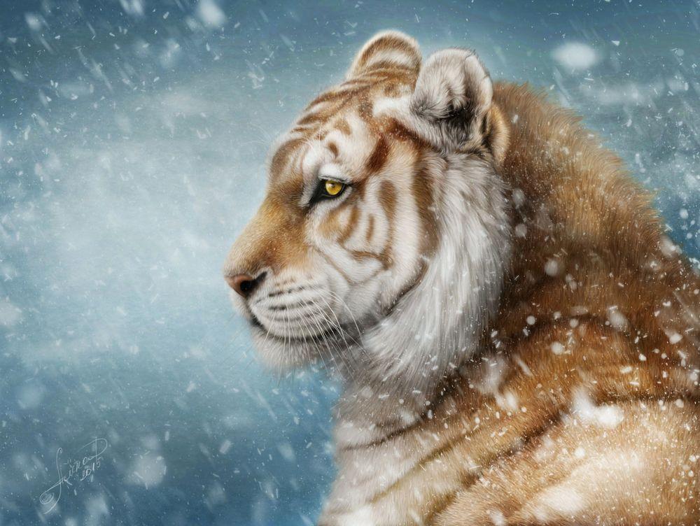 Обои для рабочего стола Тигр под снегопадом, by Alena Ekaterinburg