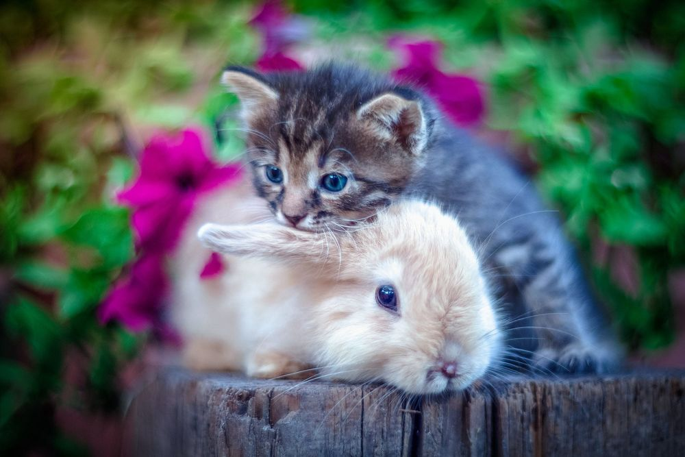 Картинки зайчиков с котятами