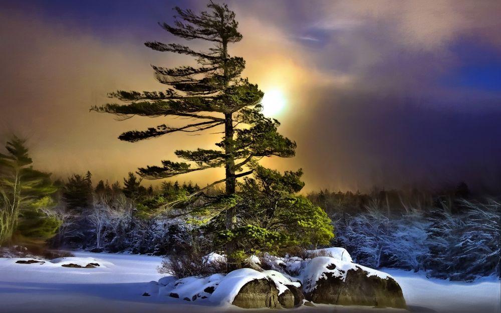 Обои Дерево на ветру на фоне солнца на закате, by jarr1520 ...