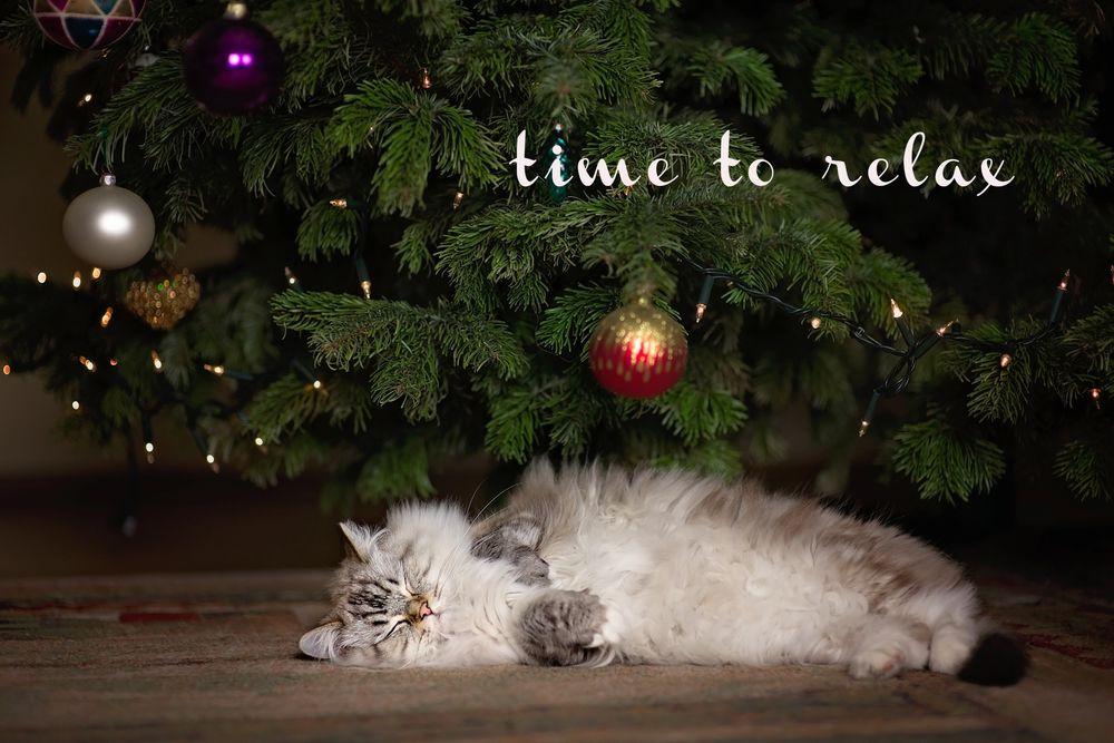 Обои для рабочего стола Котенок породы рэгдолл спит под новогодней елкой (time to relax / время расслабиться), фотограф Monika Koc