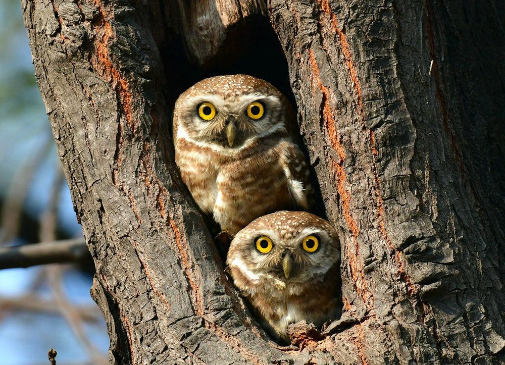 сестра картинки две совы на дереве оснащено таймером, позволяющим