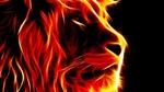 Обои Огненная морда льва на черном фоне
