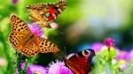 Обои Бабочки на размытом фоне природы