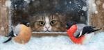 Обои Кот за окном наблюдает за снегирями, by Alena Ekaterinburg