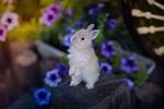 Обои Белый кролик стоит на задних лапках на фоне цветов, фотограф Yuriy Korotun