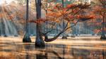 Обои Утро на болоте, фотограф Alex Mironyuk