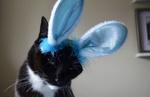 Обои Кошка в ободке с кроличьими ушками