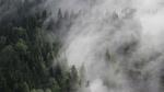 Обои Туманный лес в горах Австрии